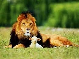 pecora e leone